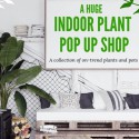 My Jungle Home - Huge Indoor Plant + Pot Sale - Pop Up Shop