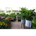 Mega Indoor Plant + Pot Warehouse Sale - Pop Up Shop
